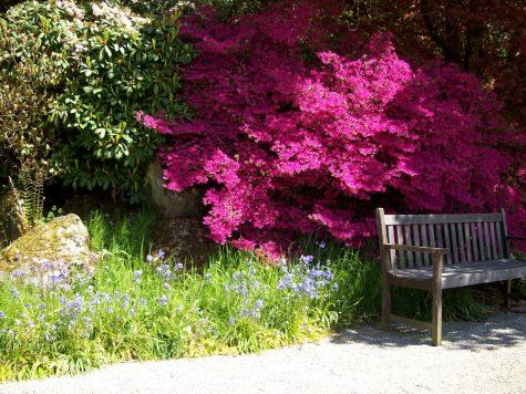 The beautiful Pencarrow gardens in Cornwall